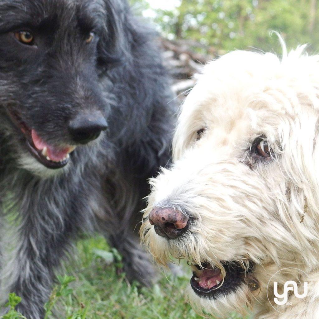 Prieteni patrupezi - URSU si IRINA _ YaU BLOG _ elena toader (4)