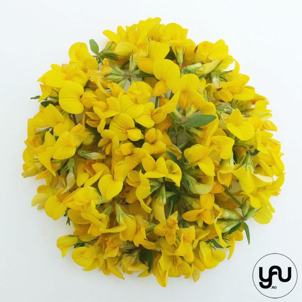 flori galbene in texturi vegetale _ yauconcept _ elenatoader (4)
