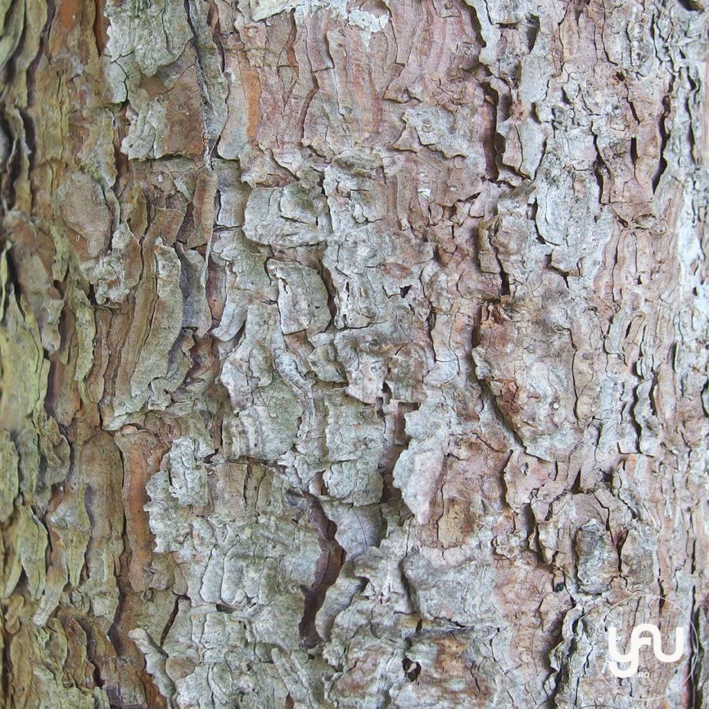digital-paper-_-texturi-lemn-_-wood-patterns-_-yauconcept-_-elenatoader-2