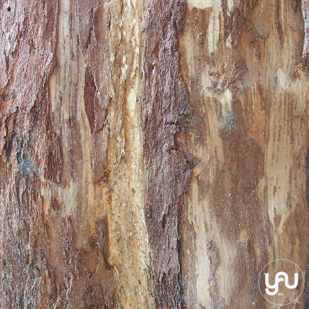 digital-paper-_-texturi-lemn-_-wood-patterns-_-yauconcept-_-elenatoader-4