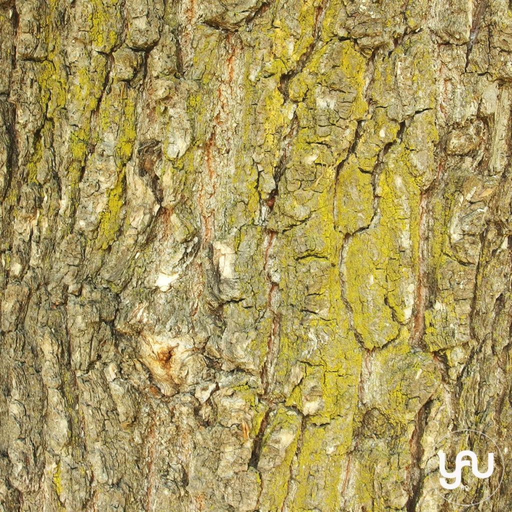 digital-paper-_-texturi-lemn-_-wood-patterns-_-yauconcept-_-elenatoader-5