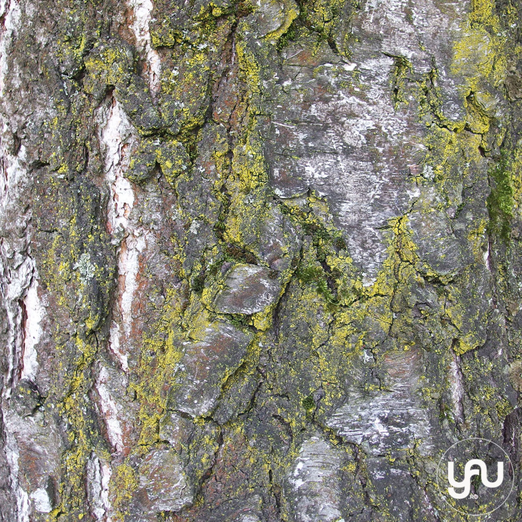 digital-paper-_-texturi-lemn-_-wood-patterns-_-yauconcept-_-elenatoader-6