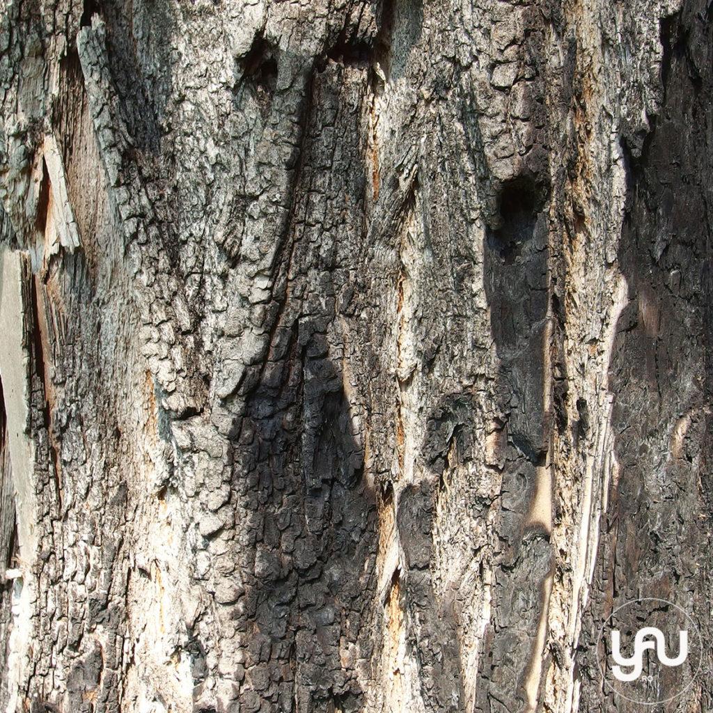 digital-paper-_-texturi-lemn-_-wood-patterns-_-yauconcept-_-elenatoader-7