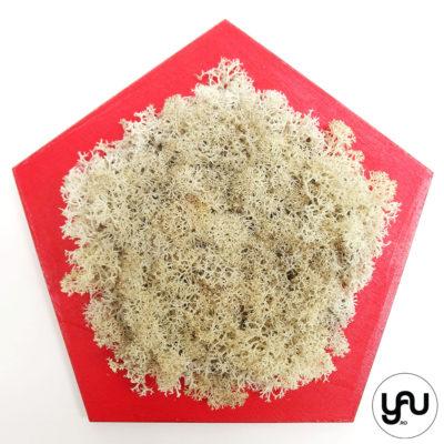 licheni-stabilizati-crem-decor-perete-pentagon_-yauconcept-_-elenatoader-3
