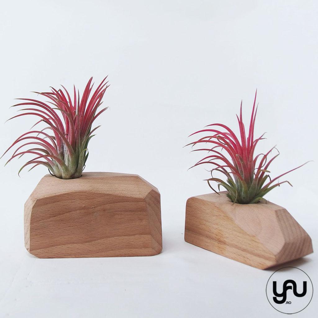 Cadou floral MARTIE - plante aeriene si lemn _ yauconcept _ elenatoader _ flori 1-8 martie (2)