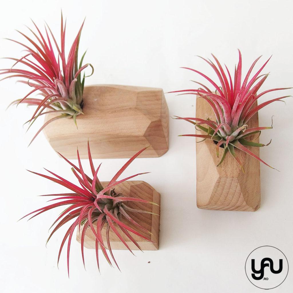 Cadou floral MARTIE - plante aeriene si lemn _ yauconcept _ elenatoader _ flori 1-8 martie (3)