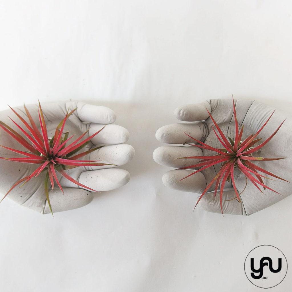 plante aeriente rosii in MANA ta, pentru acest MARTIE _ YaU Concept _ elenatoader _ flori 1-8 martie (4)