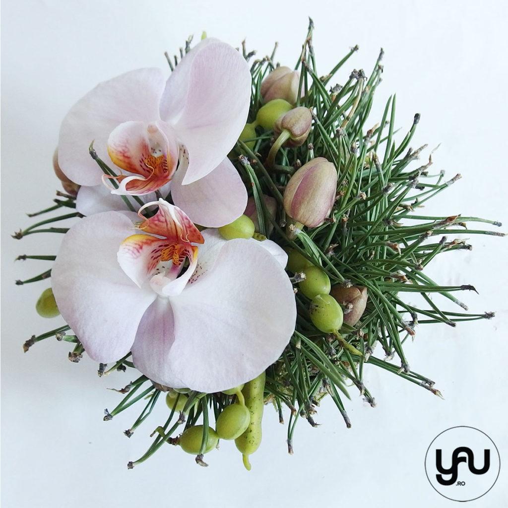 Aranjament orhidee si pin YaUconcept ElenaTOADER