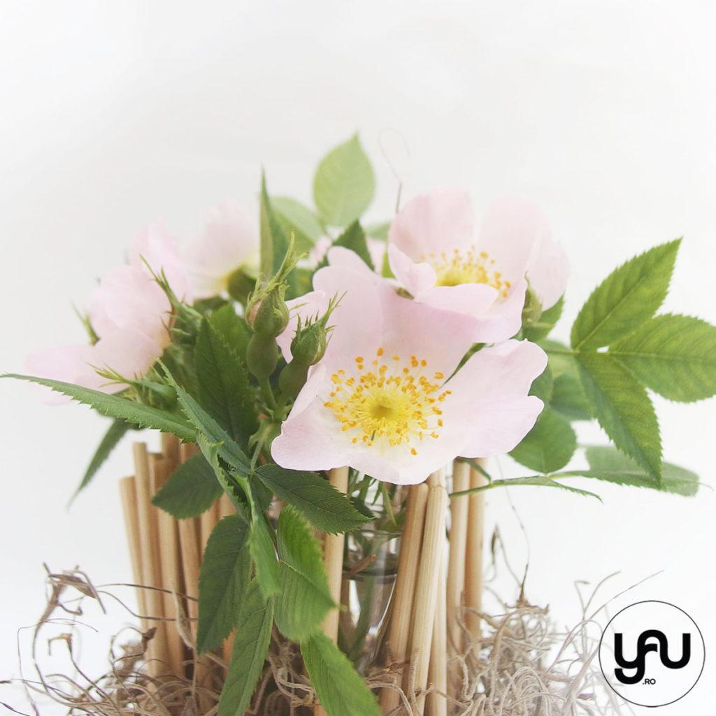 Flori de MACES sau tranadfir salbatic YaUconcept ElenaTOADER