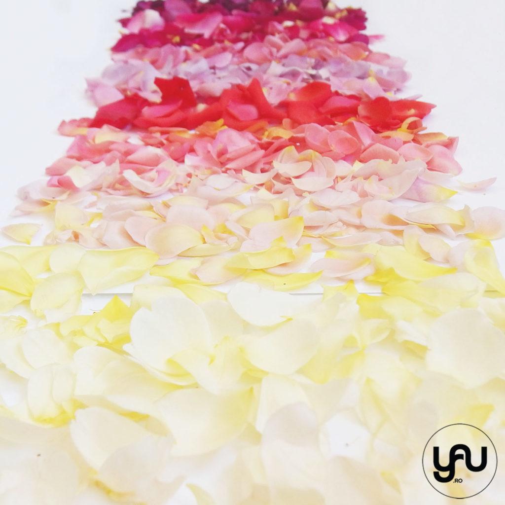 Petale de trandafir YaUconcept ElenaTOADER