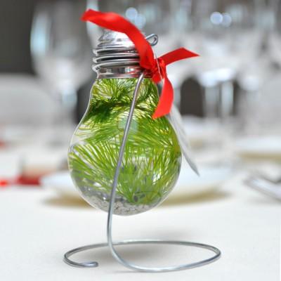 yau flori+yau evenimente+cadouri invitati+plante intr-un bec