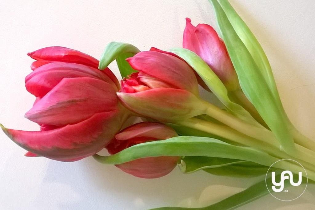 yau blog+yau flowers _ perfect red flower