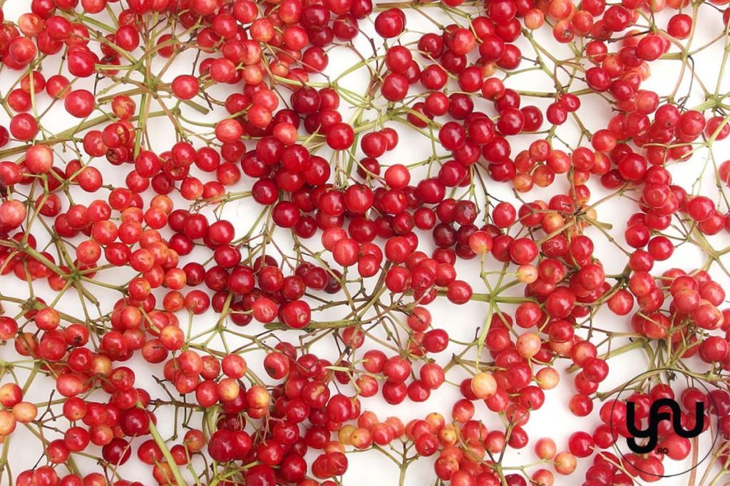 TEXTURA de vara _ summer patterns bobite rosii de vara_yau _ yau concept_elenatoader (1)