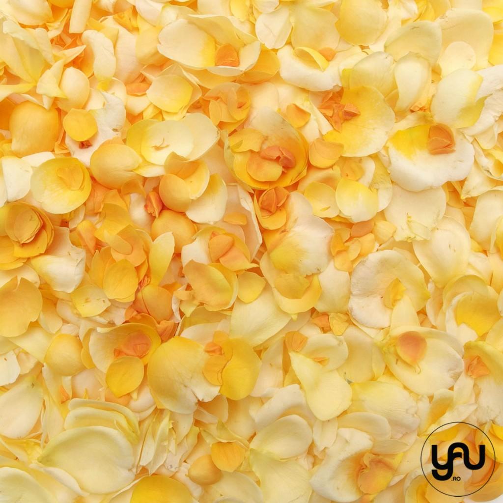 TRANDAFIRI DE GRADINA _ geometria trandafirilor _ yau concept_yau flori_elena toader (7)