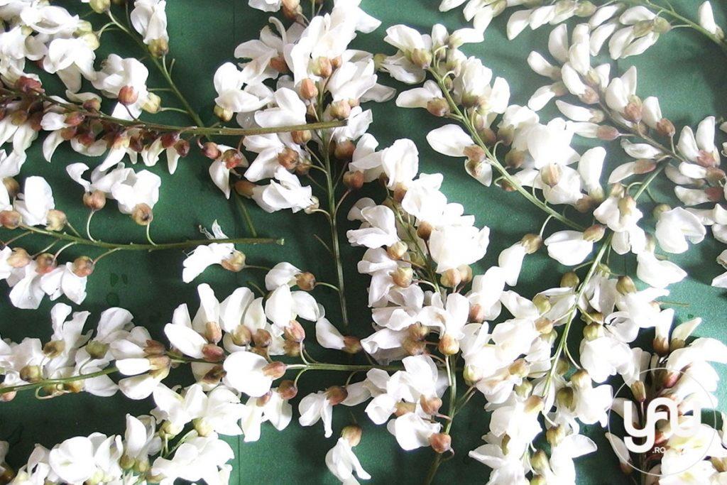 Flori de salcam _ yau concept _ elena toader (1)
