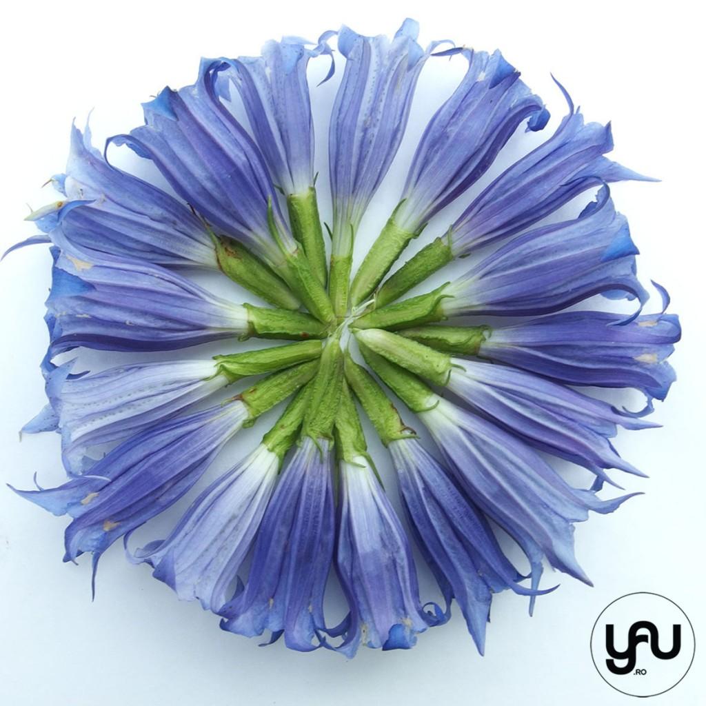 flori albastre texturi vegetale_vegetal patterns_yauconcept_elenatoader (2)