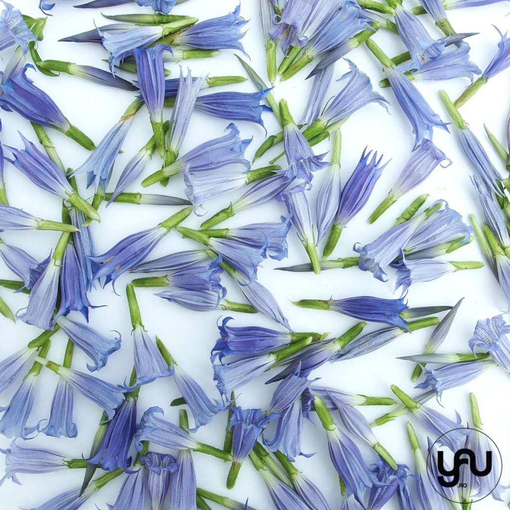 flori albastre texturi vegetale_vegetal patterns_yauconcept_elenatoader (4)