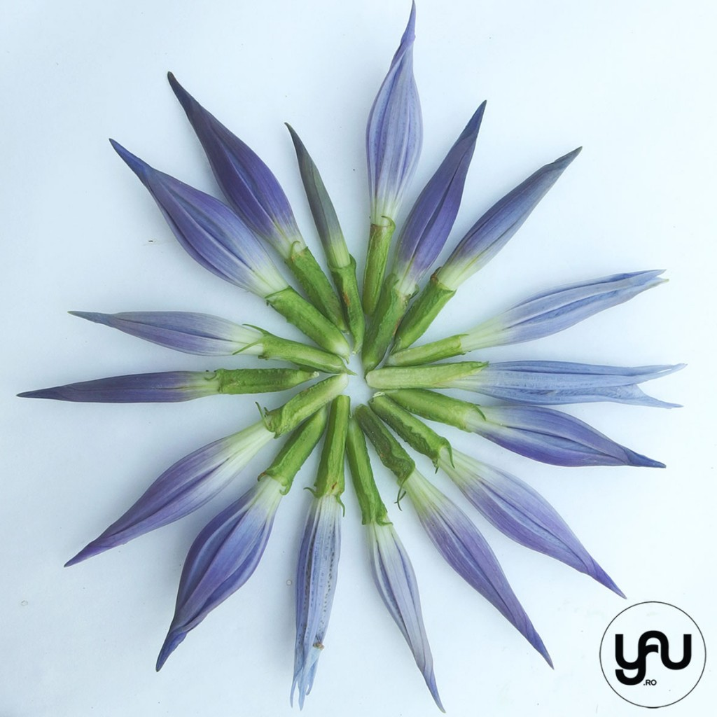 flori albastre texturi vegetale_vegetal patterns_yauconcept_elenatoader (7)