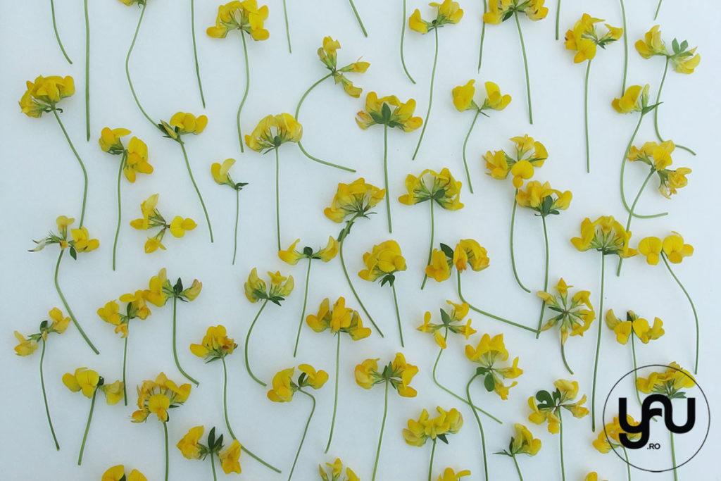flori galbene in texturi vegetale _ yauconcept _ elenatoader (1)