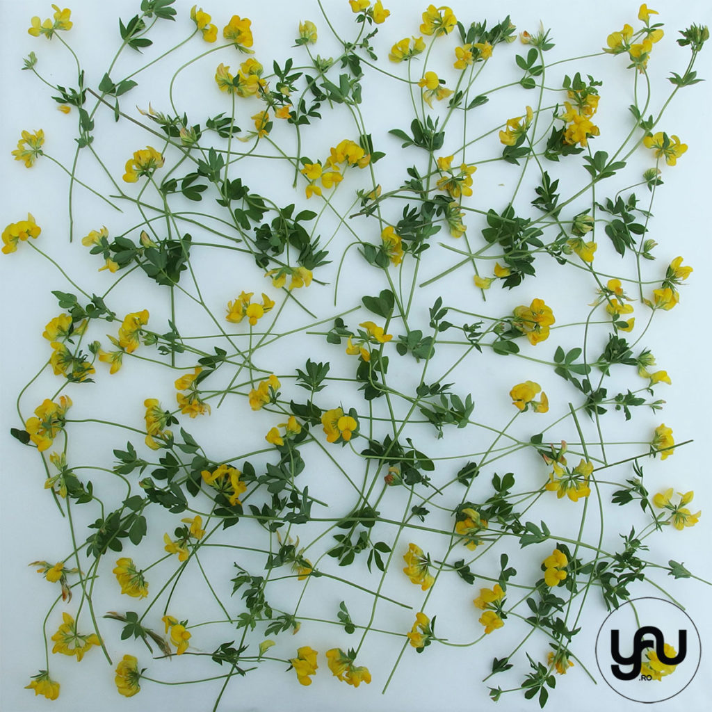 flori galbene in texturi vegetale _ yauconcept _ elenatoader (3)