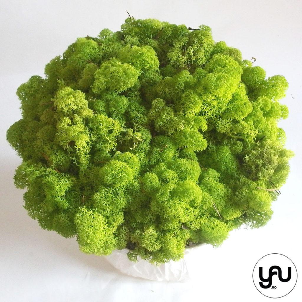 decor-verde-cu-muschi-licheni-_-yauconcept-_-elena-toader-3