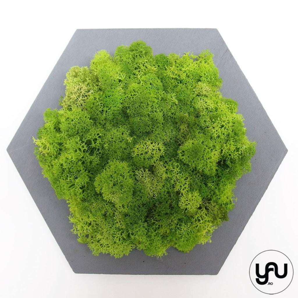 cadouri-craciun-licheni-stabilizati-verzi-forme-geometrice-_-yauconcept-_-elenatoader-2