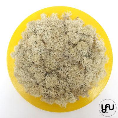 licheni-stabilizati-crem-decor-perete-cerc-_-yauconcept-_-elenatoader-4