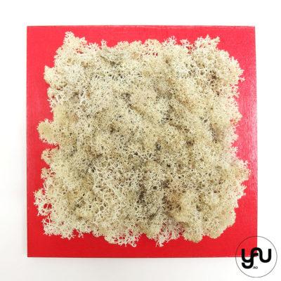 licheni-stabilizati-crem-decor-perete-patrat-_-yauconcept-_-elenatoader-2