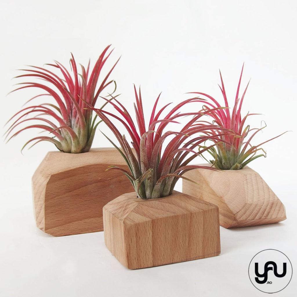Cadou floral MARTIE - plante aeriene si lemn _ yauconcept _ elenatoader _ flori 1-8 martie (4)