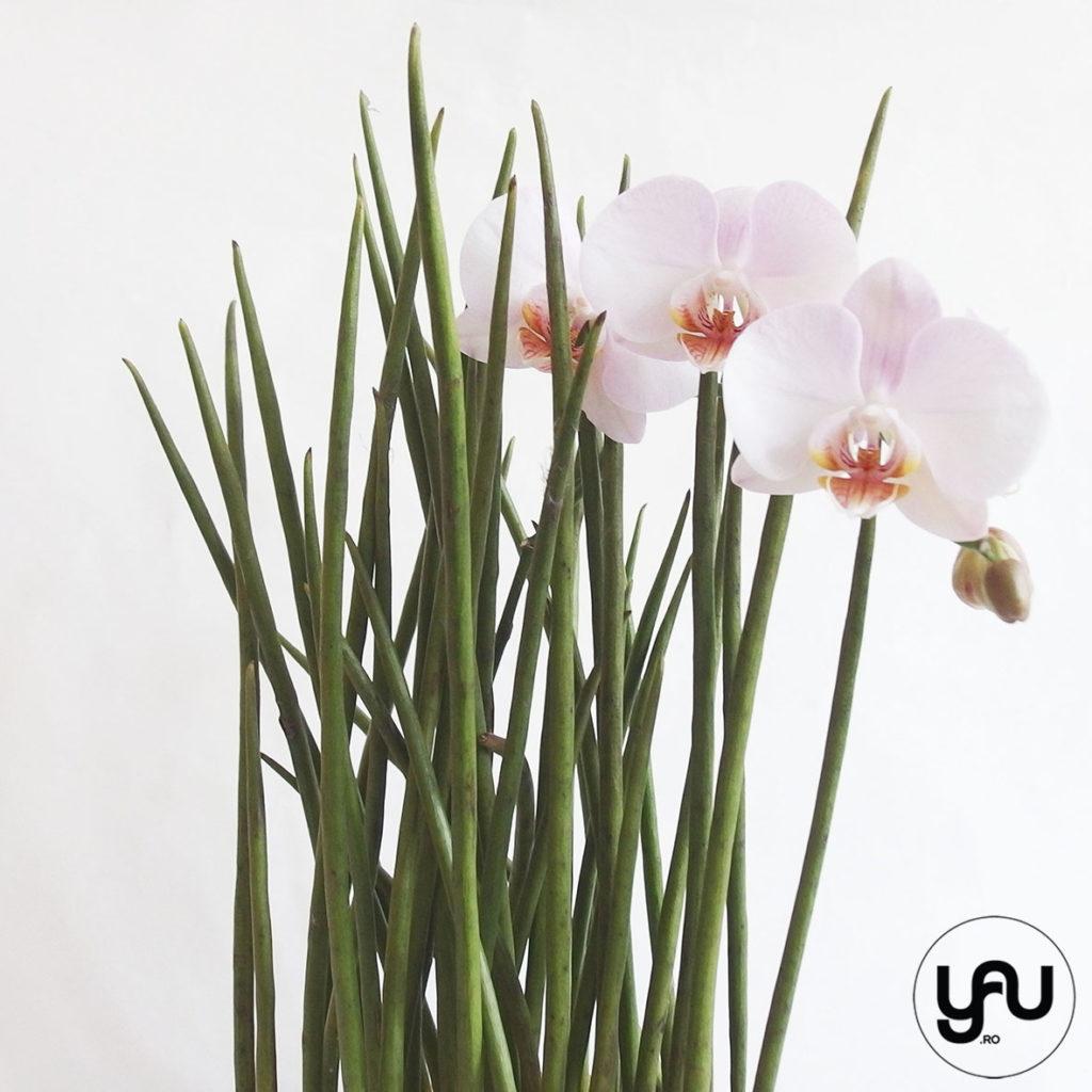 Pink orchids LESS IS MORE YaUconcept ElenaTOADER