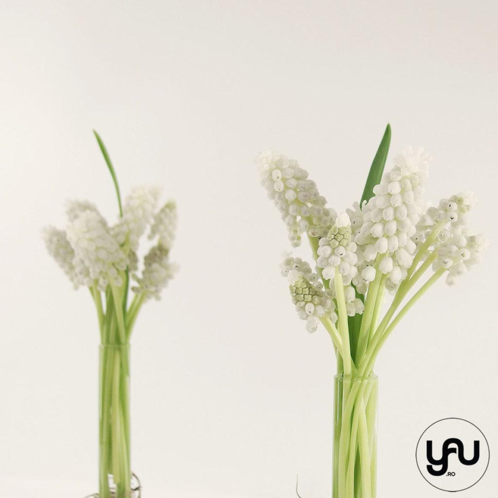 MUSCARI alb yau.ro yau concept Elena toader floral architect contemporary floral art